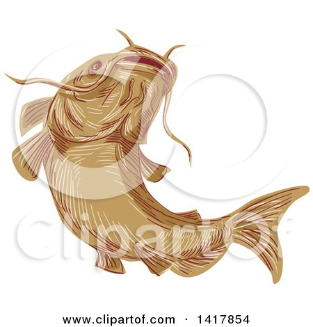 Clipart of a Sketched Ray-finned Fish Catfish - Royalty Free Vector Illustration by patrimonio