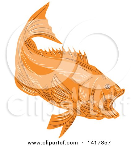 Clipart of a Sketched Orange Largemouth Bass Fish - Royalty Free Vector Illustration by patrimonio