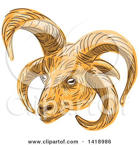 Clipart of a Sketched Manx Loaghtan, Loaghtyn or Loghtan, Sheep Head - Royalty Free Vector Illustration by patrimonio