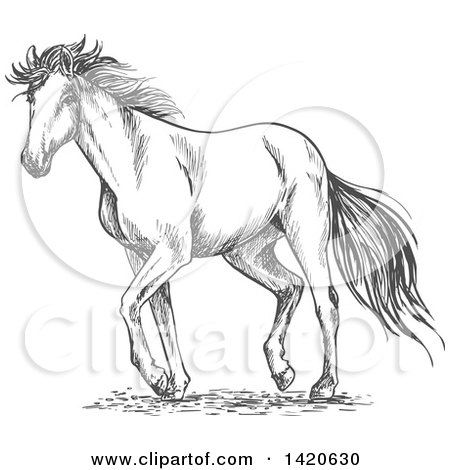 Clipart of a Sketched Gray Horse - Royalty Free Vector Illustration by Vector Tradition SM