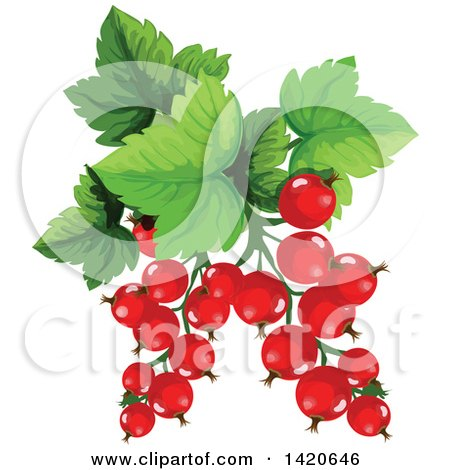 Clipart of Red Currants and Leaves - Royalty Free Vector Illustration by Vector Tradition SM