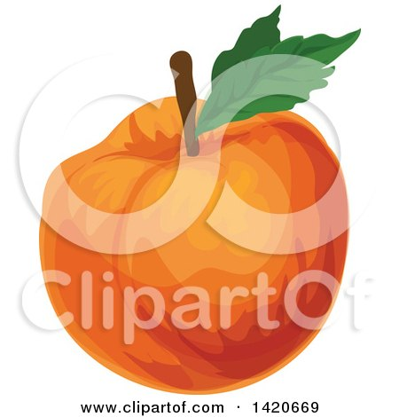 Clipart of a Peach Apricot or Nectarine - Royalty Free Vector Illustration by Vector Tradition SM