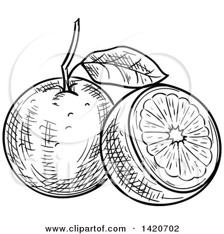 Clipart Of A Black And White Sketched Navel Orange
