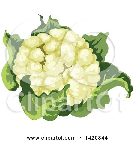 Clipart of a Head of Cauliflower - Royalty Free Vector Illustration by Vector Tradition SM