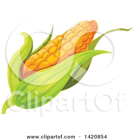 Clipart of a Fresh Ear of Corn - Royalty Free Vector Illustration by Vector Tradition SM