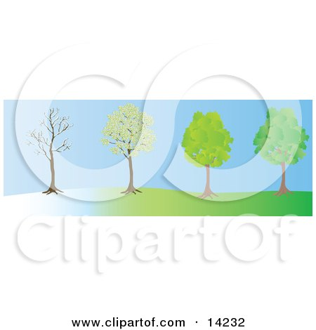 the Same Tree in the Winter, Spring and Summer Seasons Clipart Illustration by Rasmussen Images