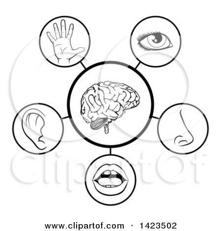 Clipart of a Black and White Diagram of the 5 Senses - Royalty Free Vector Illustration by AtStockIllustration