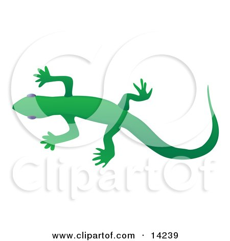 Solid Green Gecko Lizard Over a White Background Wildlife Clipart Illustration by Rasmussen Images