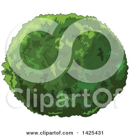 Clipart of a Lush Green Shrub - Royalty Free Vector Illustration by Pushkin
