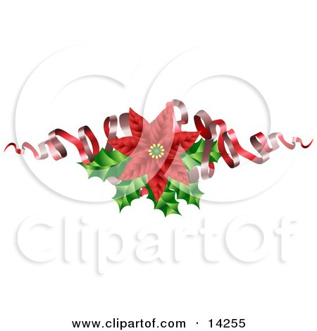 Christmas Decoration of a Blooming Red Poinsettia Flower With Holly and Ribbons Posters, Art Prints