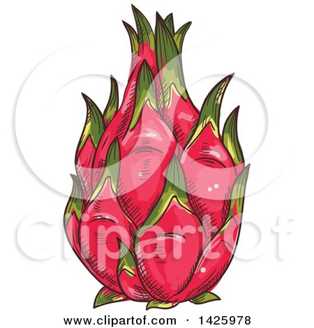 Clipart of a Sketched Whole Dragonfruit - Royalty Free Vector Illustration by Vector Tradition SM