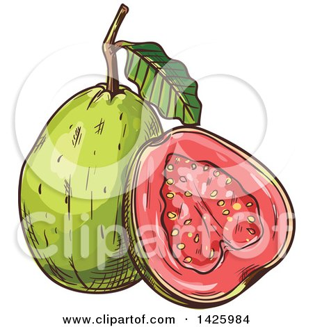 Clipart of a Sketched Guava - Royalty Free Vector Illustration by Vector Tradition SM