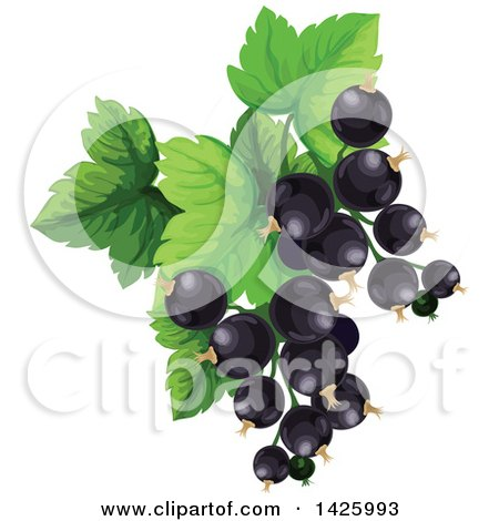Clipart of a Bunch of Black Currants - Royalty Free Vector Illustration by Vector Tradition SM