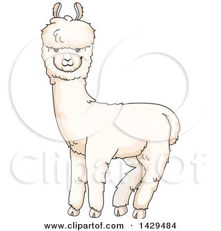 Royalty Free Rf Alpaca Clipart Illustrations Vector