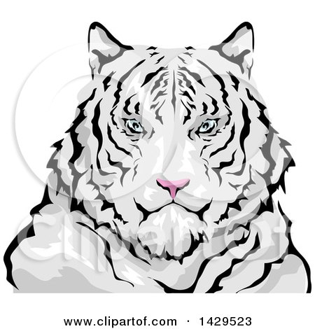 Clipart of a Siberian White Tiger - Royalty Free Vector Illustration by BNP Design Studio