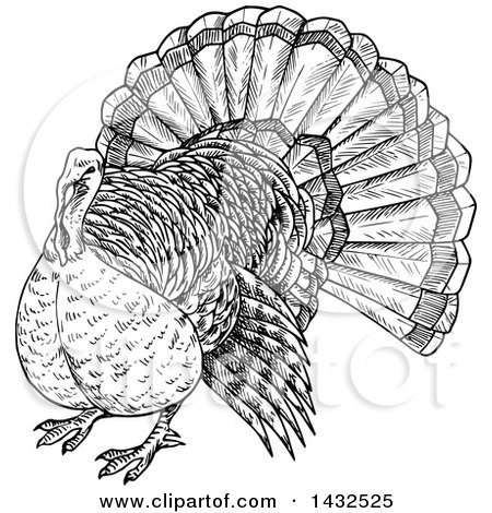 Clipart of a Sketched Black and White Turkey Bird - Royalty Free Vector Illustration by Vector Tradition SM