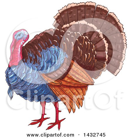 Clipart of a Sketched Turkey Bird - Royalty Free Vector Illustration by Vector Tradition SM