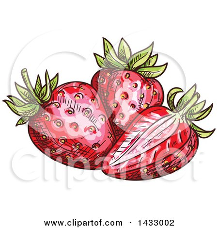 Clipart of Sketched Strawberries - Royalty Free Vector Illustration by Vector Tradition SM