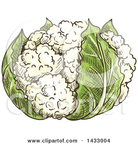 Clipart of a Sketched Head of Cauliflower - Royalty Free Vector Illustration by Vector Tradition SM