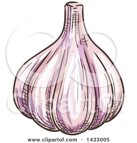 Clipart of a Sketched Garlic Bulb - Royalty Free Vector Illustration by Vector Tradition SM