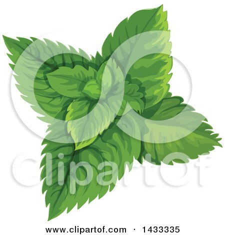 Clipart of Mint Leaves - Royalty Free Vector Illustration by Vector Tradition SM