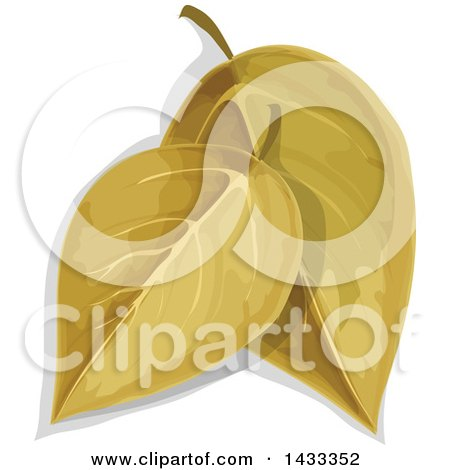 Clipart of Bay Leaves - Royalty Free Vector Illustration by Vector Tradition SM