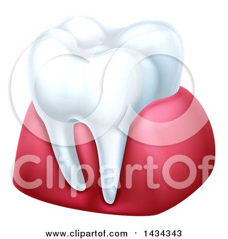 Clipart of a 3d Tooth and Gums - Royalty Free Vector Illustration by AtStockIllustration