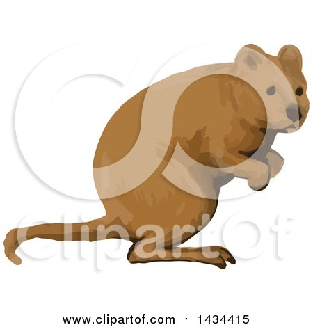 Clipart of a Watercolor Quokka - Royalty Free Vector Illustration by patrimonio