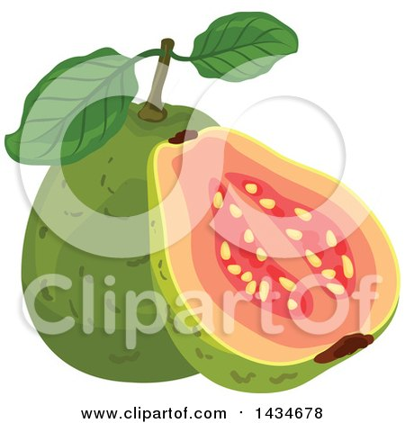 Clipart of Tropical Exotic Guava Fruit - Royalty Free Vector Illustration by Vector Tradition SM