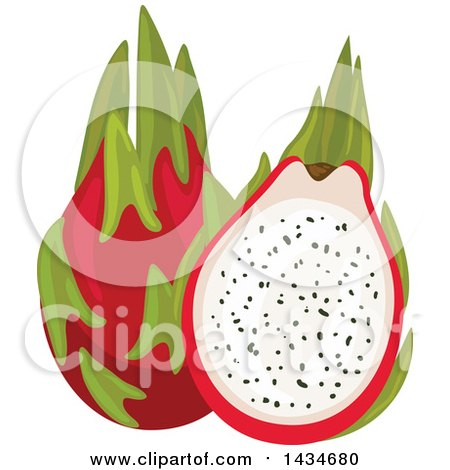 Clipart of Tropical Exotic Dragon Fruit - Royalty Free Vector Illustration by Vector Tradition SM