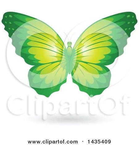 Clipart of a Flying Green Butterfly and Shadow - Royalty Free Vector Illustration by cidepix