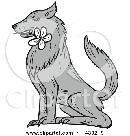 Clipart of a Sketched Timber Wolf Sitting with a White Plumeria Flower in His Mouth - Royalty Free Vector Illustration by patrimonio