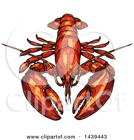 Clipart of a Sketched and Colored Lobster - Royalty Free Vector Illustration by Vector Tradition SM