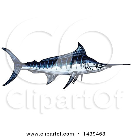 Clipart of a Sketched and Colored Marlin Fish - Royalty Free Vector Illustration by Vector Tradition SM