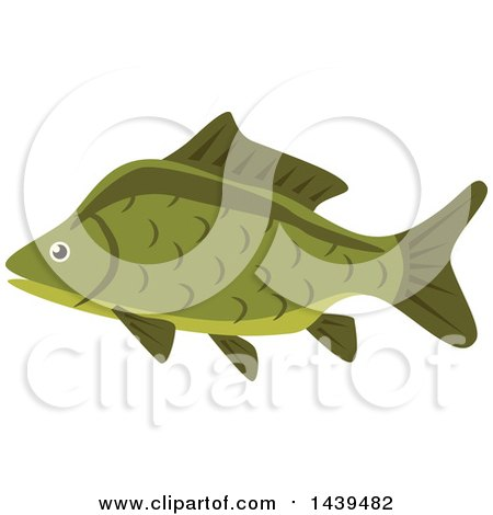 Clipart of a Carp Fish - Royalty Free Vector Illustration by Vector Tradition SM