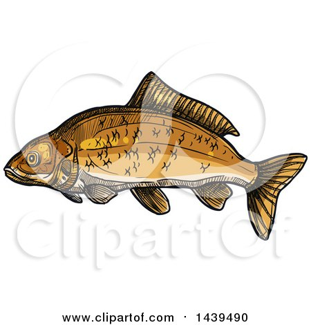 Clipart of a Sketched and Colored Carp Fish - Royalty Free Vector Illustration by Vector Tradition SM