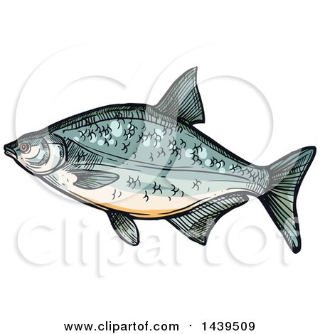 Clipart of a Sketched and Colored Bream Fish - Royalty Free Vector Illustration by Vector Tradition SM