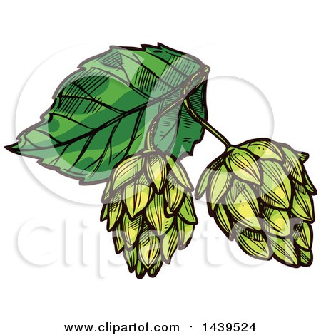 Clipart of Sketched Beer Hops - Royalty Free Vector Illustration by Vector Tradition SM