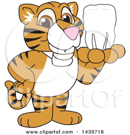 Clipart of a Tiger Cub School Mascot Character Holding a Tooth - Royalty Free Vector Illustration by Toons4Biz