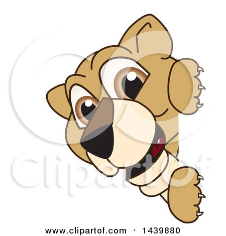 Clipart of a Lion Cub School Mascot Character Looking Around a Sign - Royalty Free Vector Illustration by Toons4Biz