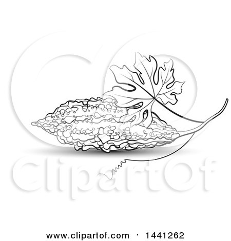 ampalaya coloring pages | Bitter Melon Gourd Drawing Sketch Coloring Page