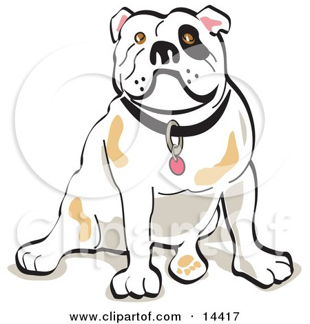 Bulldog Sitting  Posters, Art Prints