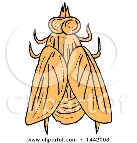 Clipart of a Sketched Top View of a House Fly - Royalty Free Vector Illustration by patrimonio