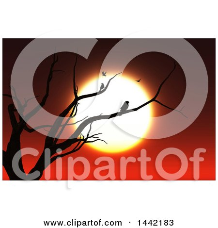 Clipart of a Silhouetted Bare Tree with Birds Against a Sunset - Royalty Free Illustration by KJ Pargeter