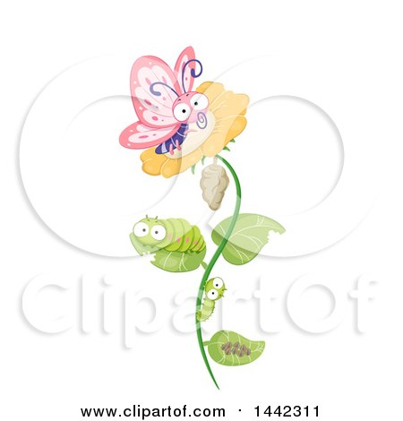 Clipart of a Cocoon, Larvae, Caterpillars and Butterfly on a Flower, the Life Cycle of a Butterfly - Royalty Free Vector Illustration by BNP Design Studio