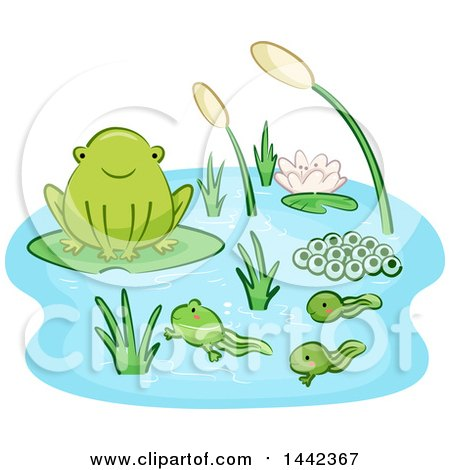 Clipart of a Life Cycle of a Frog with Eggs, Tadpoles and an Adult - Royalty Free Vector Illustration by BNP Design Studio