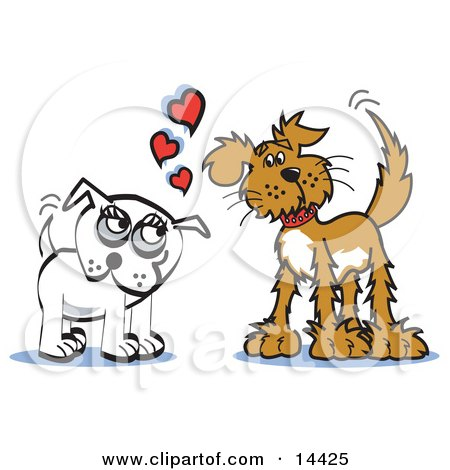 Two Infatuated Dogs Staring at Eachother and Wagging Their Tails Posters, Art Prints