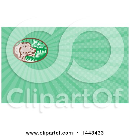 Clipart of a Retro Chocolate Lab Dog by a Lake with Pheasants Flying and Green Rays Background or Business Card Design - Royalty Free Illustration by patrimonio