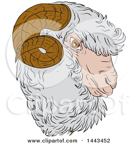 Clipart of a Sketched Drawing Styled Merino Ram Sheep Head - Royalty Free Vector Illustration by patrimonio