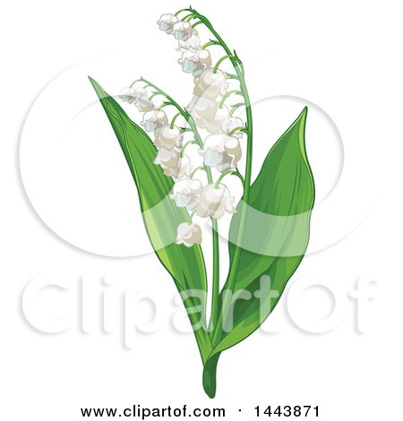 Clipart of a Lily of the Valley Convallaria Plant - Royalty Free Vector Illustration by Pushkin